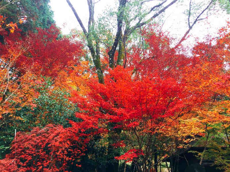 長崎県内で見たい♡イチ押し紅葉スポット5選!