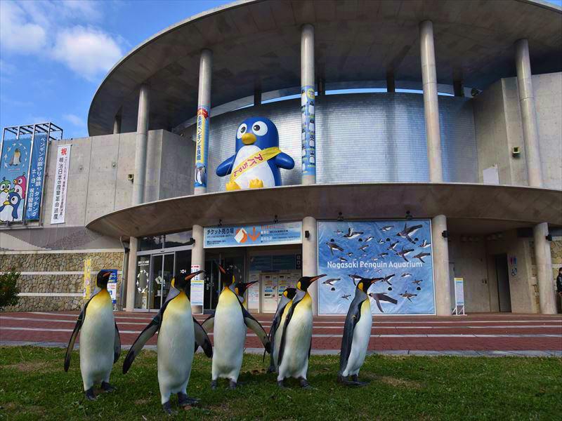 自然を学べる施設!長崎ペンギン水族館4つの魅力