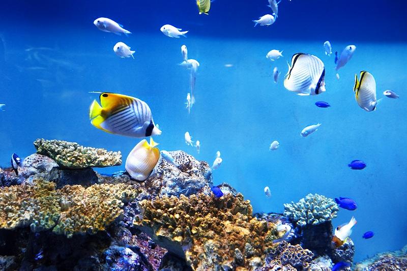 生き物とふれあえる!長崎県にある家族で楽しめる水族館3選!