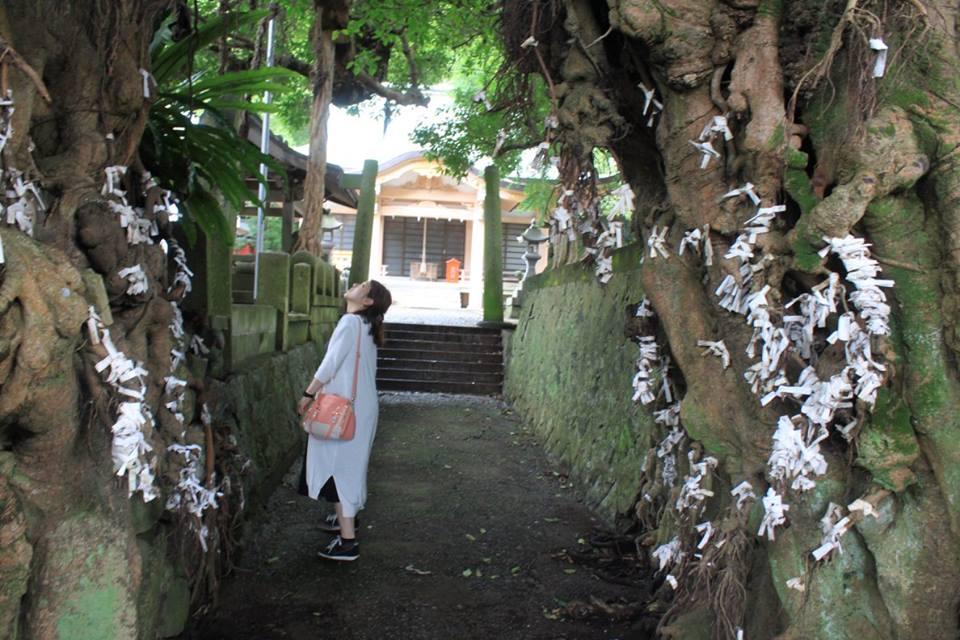 【上五島パワースポット】樹齢650年超、アコウ樹・奈良尾神社