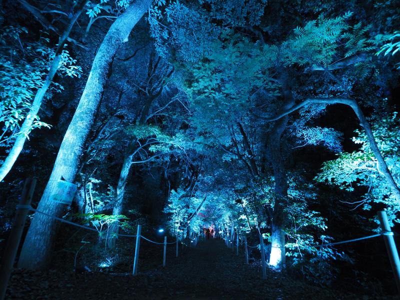 6月3日から始まる、チームラボ「大村の神社に浮遊する球体、呼応する城跡と森」先行内覧会へ行ってきた!