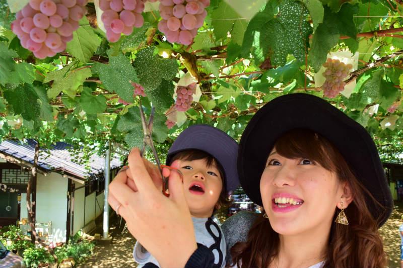 食欲の秋♡長崎県内でくだもの狩りができるスポット7選!