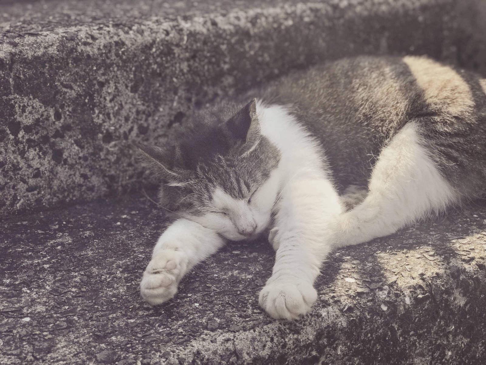 """「にゃんにゃんにゃん!」2月22日""""猫の日"""""""