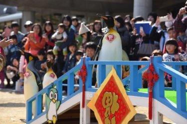 ペンギンと祝うもうひとつのランタンフェスティバル|長崎ペンギン水族館「ペンギンと海のランタン展」