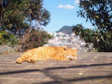 長崎猫に会いたい!1日で何匹の猫に会えるのか数えてみた。